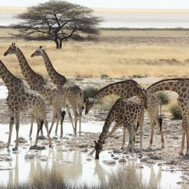 Namibian Highlights self-drive safari